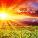 Sunny landscape.
