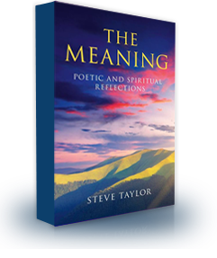 Book Cover of 'The Meaning', by Steve Taylor.